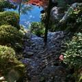 百済寺の庭 其の二