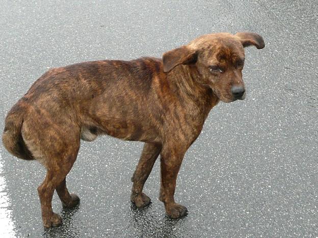 Photos: 遍路途中に遭遇した犬