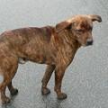 遍路途中に遭遇した犬