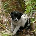 満濃池の捨て犬