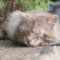 夢見ヶ崎動物公園の猫