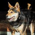 写真: 求夢荘の看板犬