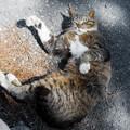 Photos: 御浜岬のネコ