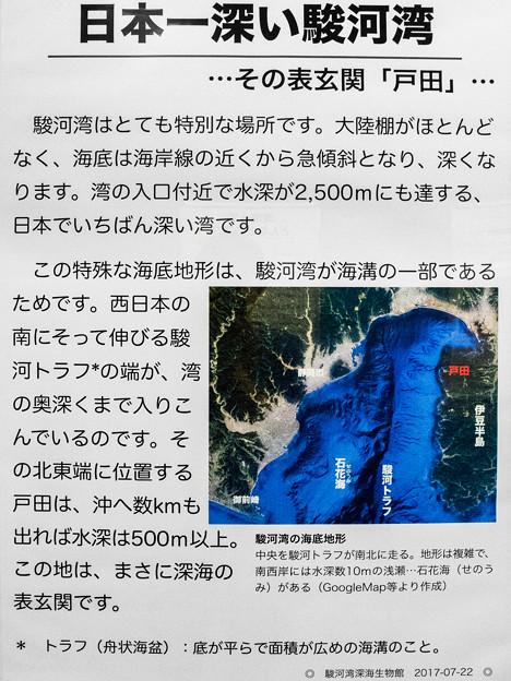 日本一深い駿河湾の説明板