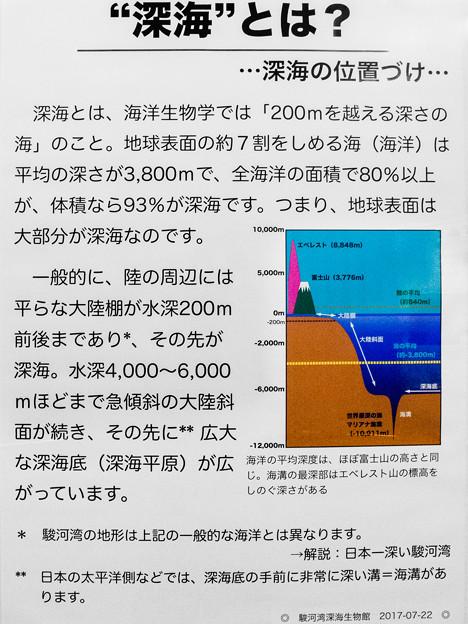 深海の説明板