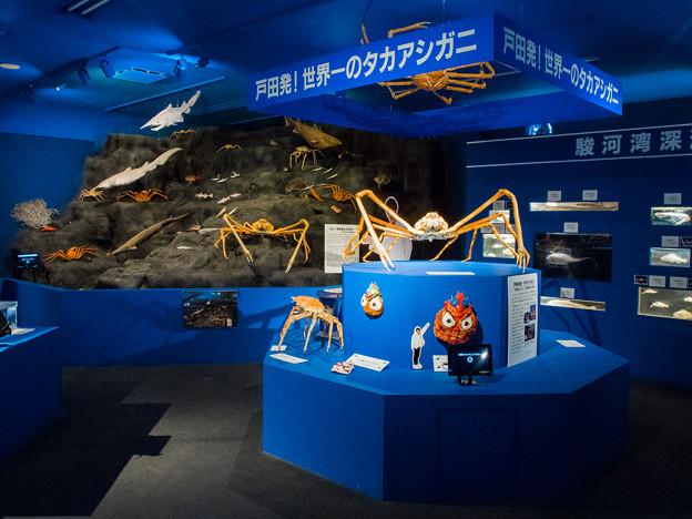 駿河湾深海生物館 駿河湾のジオラマ