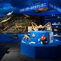 写真: 駿河湾深海生物館 駿河湾のジオラマ