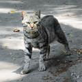 御浜岬のネコ