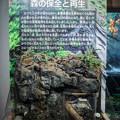 Photos: 森の保全と再生