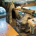 Photos: エントランスのミズナラの巨木