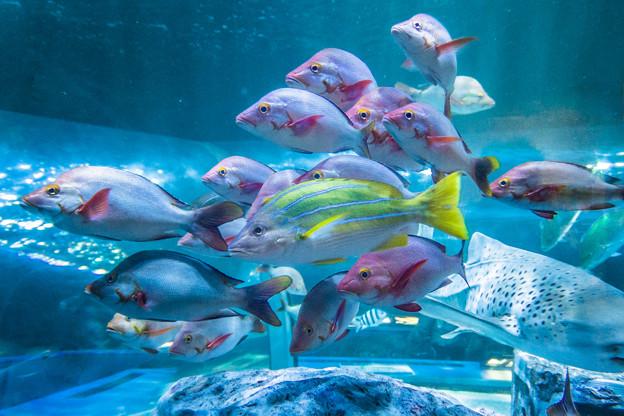 トンネル水槽の魚たち
