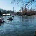 井の頭池 ボート場と七井橋