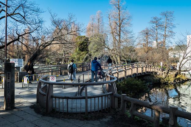 井の頭池 狛江橋