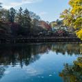 井の頭池 弁天橋