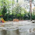 Photos: 雨の井の頭自然文化園