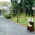 Photos: リスの木立跡地