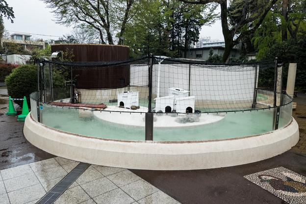 フンボルトペンギンのプール