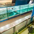 Photos: セイウチとウミガメの水槽