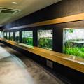 Photos: 井の頭自然文化園 水生物館