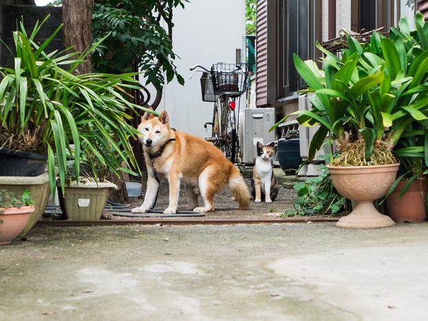 白隠の里にすむ犬と猫