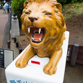 Photos: 野毛山動物園 ライオン募金