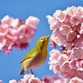 写真: お花見^^