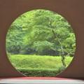 写真: 明月院新緑