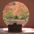 写真: 明月院紅葉