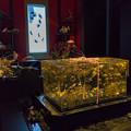 アートアクアリウム ~博多・金魚の祭~ 6