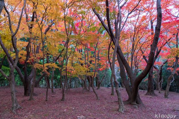 興山園 紅葉