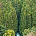 久大本線 特急ゆふいんの森