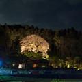 松国大山桜 ライトアップ 2