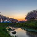 草場川 桜 夕景 3