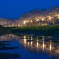 草場川 桜 ライトアップ