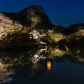 御船山楽園 桜 ライトアップ