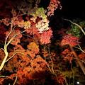 Photos: 秋の夜