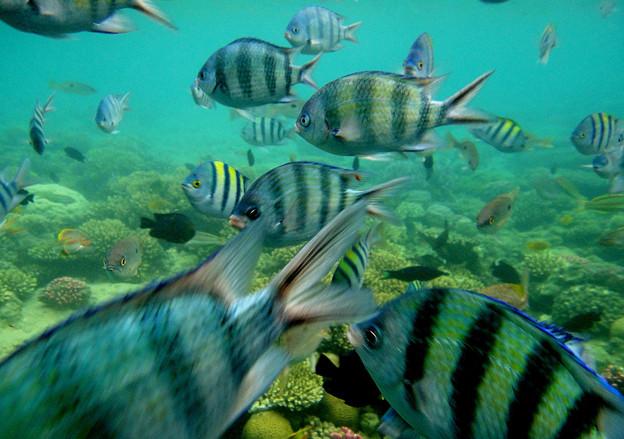 紅海の魚たち 1)