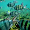 Photos: 紅海の魚たち 1)