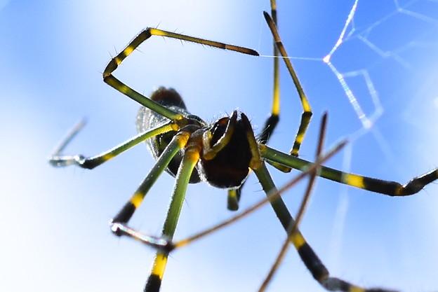 うちのクモ