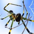 Photos: うちのクモ