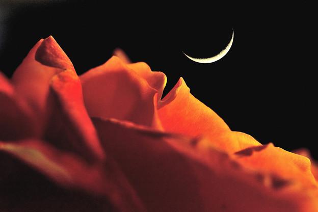Photos: バラ山の月