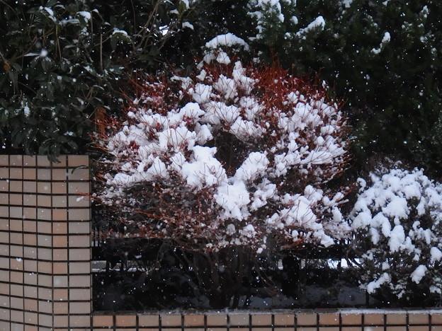3381 初雪降った