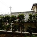 Photos: 庭の山茶花 1倍