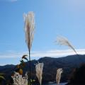 Photos: DSCN0105 三河湖すすき