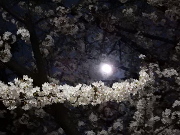 写真: 月見と花見