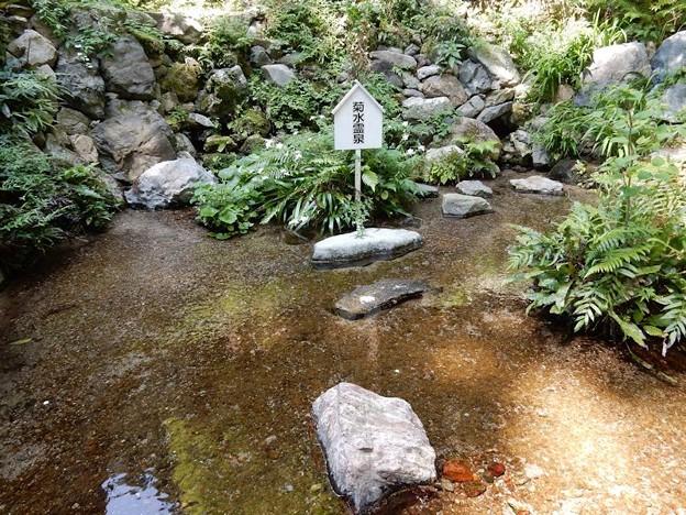 4養老神社菊水霊泉