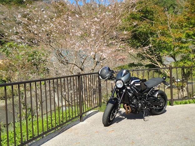 四季桜と (2)