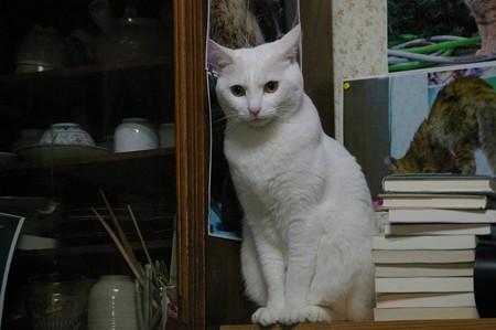 2016年4月14日のシロちゃん(雌3歳)