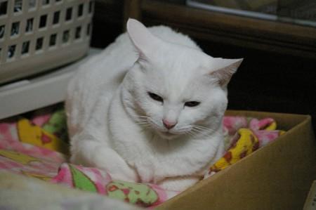 2016年5月15日のシロちゃん(雌3歳)