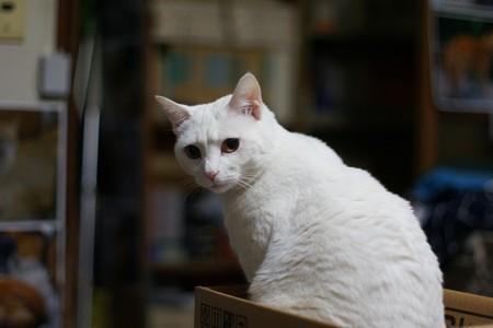 2018年1月31日のシロちゃん(雌4歳)